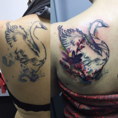 Restyling Cisne watercolor (Before, After)