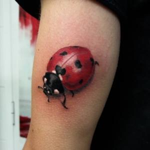 ladybug javi granged